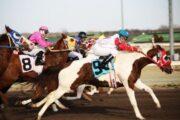 Как делать ставки на лошадиные скачки – виды ставок на скачки у букмекеров